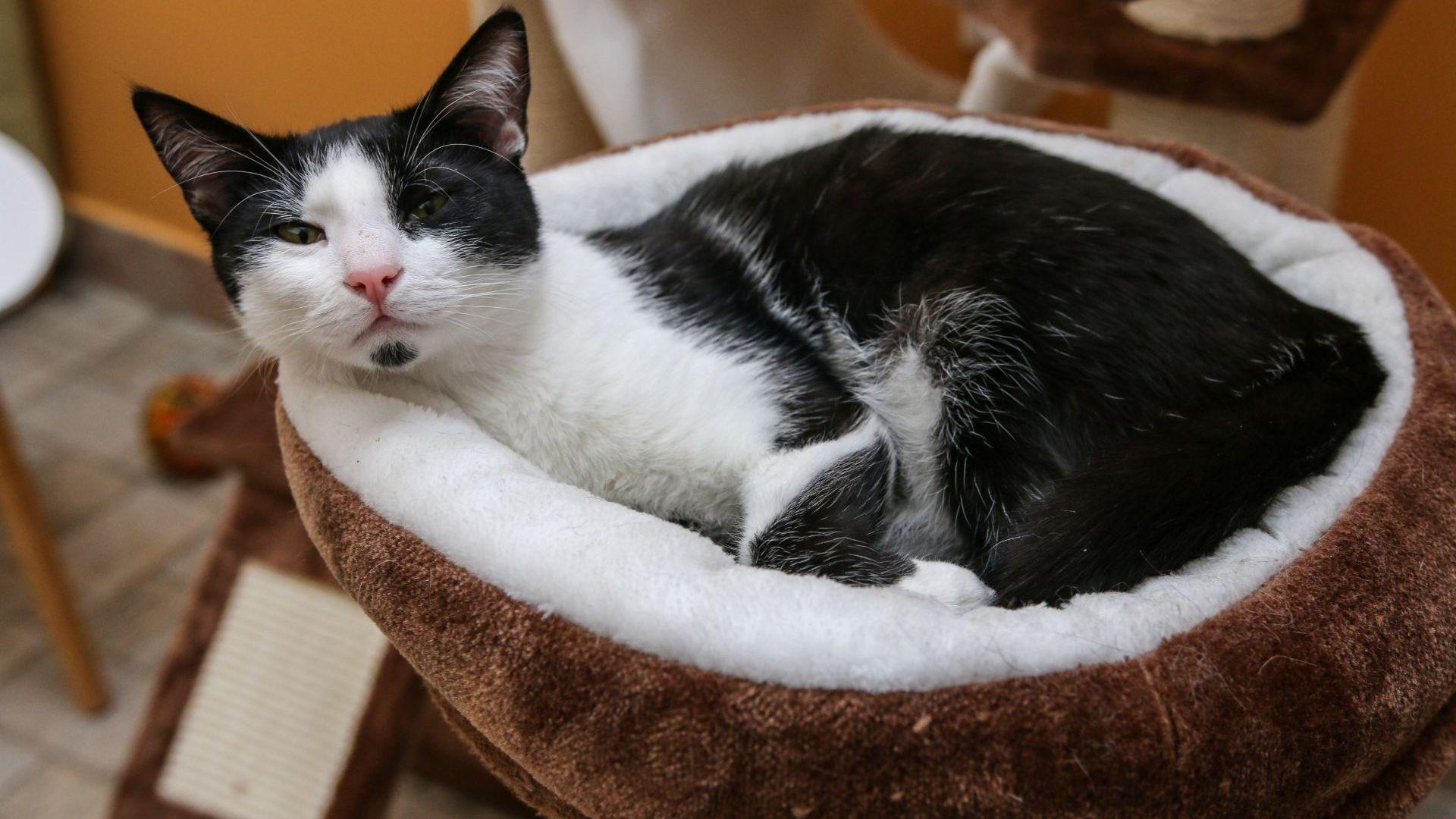 Коткотека - място за приятна работа край писанки или възможност да осиновиш