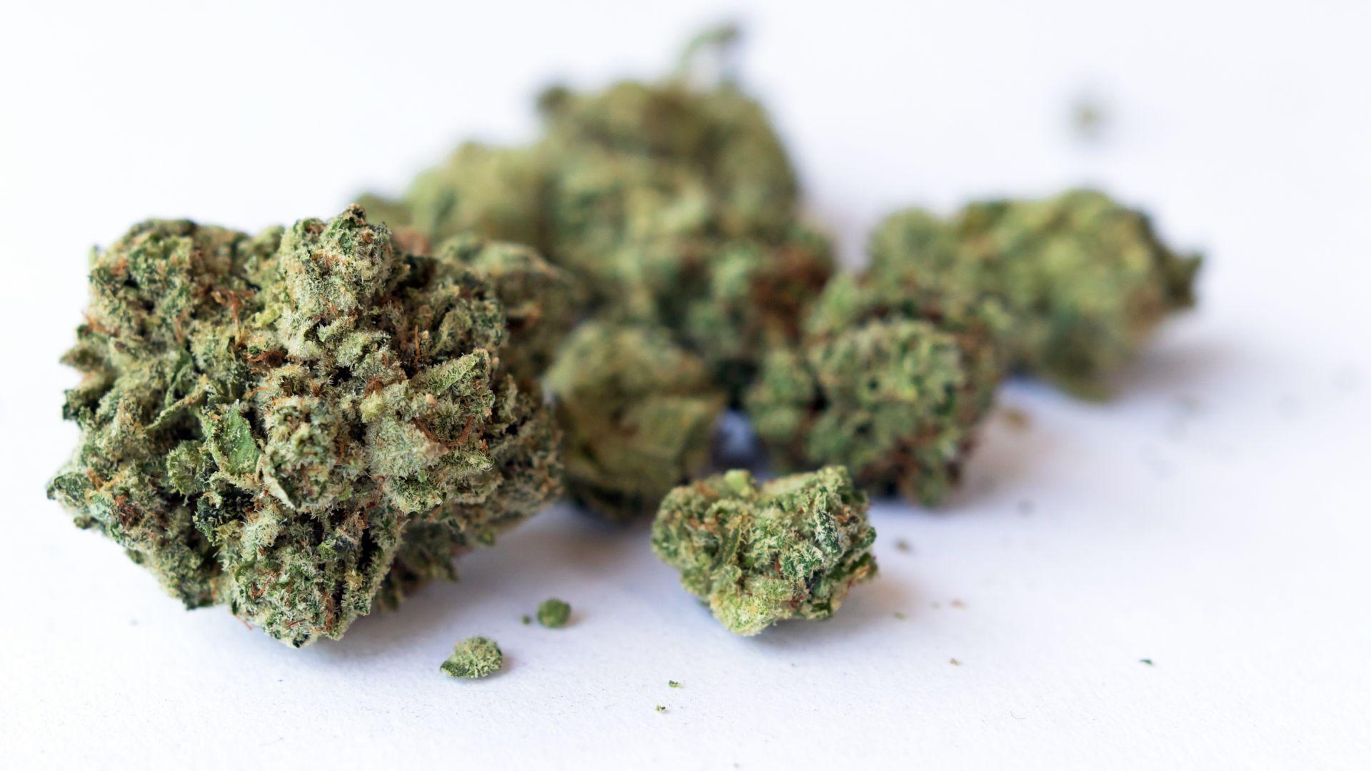 Гореща конкуренция при производството на марихуана в ЮТА
