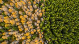 Площта на горите е нараснала с цели 7% за 35 години