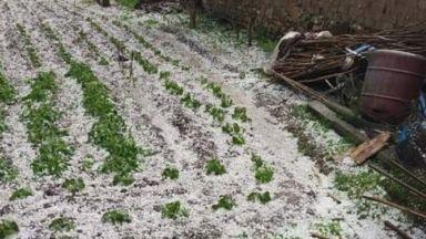 Мощна градушка удари Северозападна България (видео)