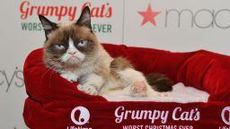 Отиде си легендата на Инстаграм - Сърдитата котка