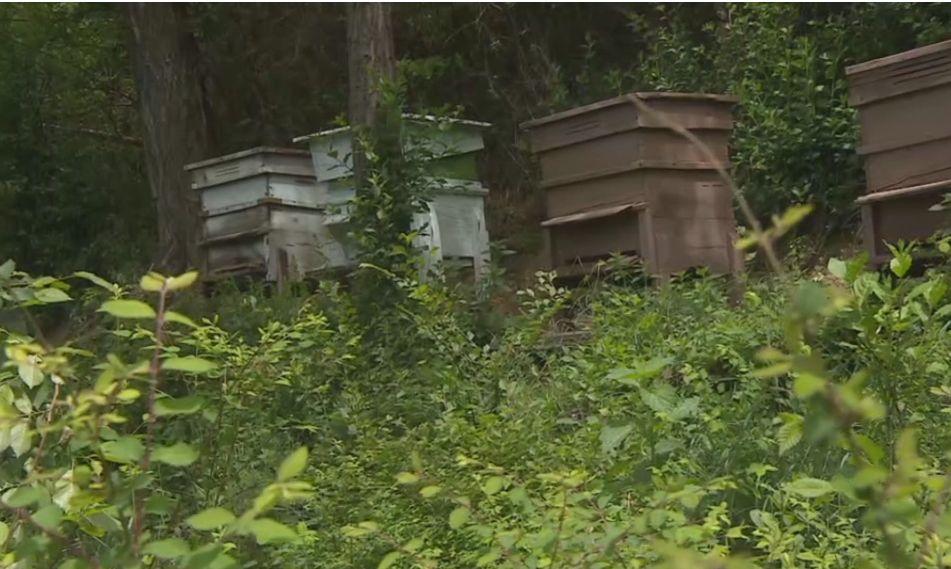 При тези пчелини е била открита пушката
