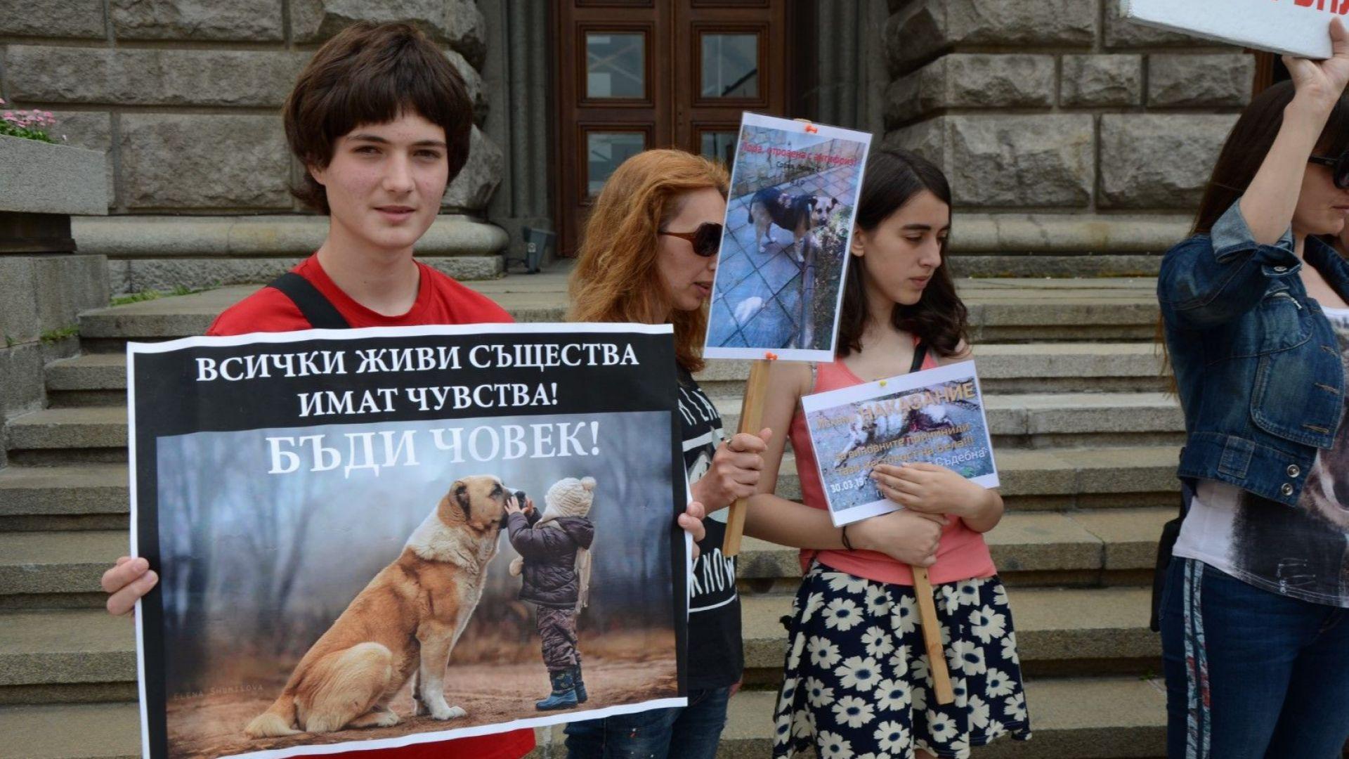 Национален протест срещу насилието над животни се състоя в редица