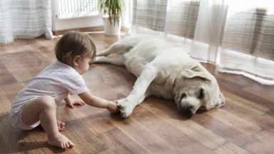 Кучетата все по-близки до хората. Умеят да разпознават думи