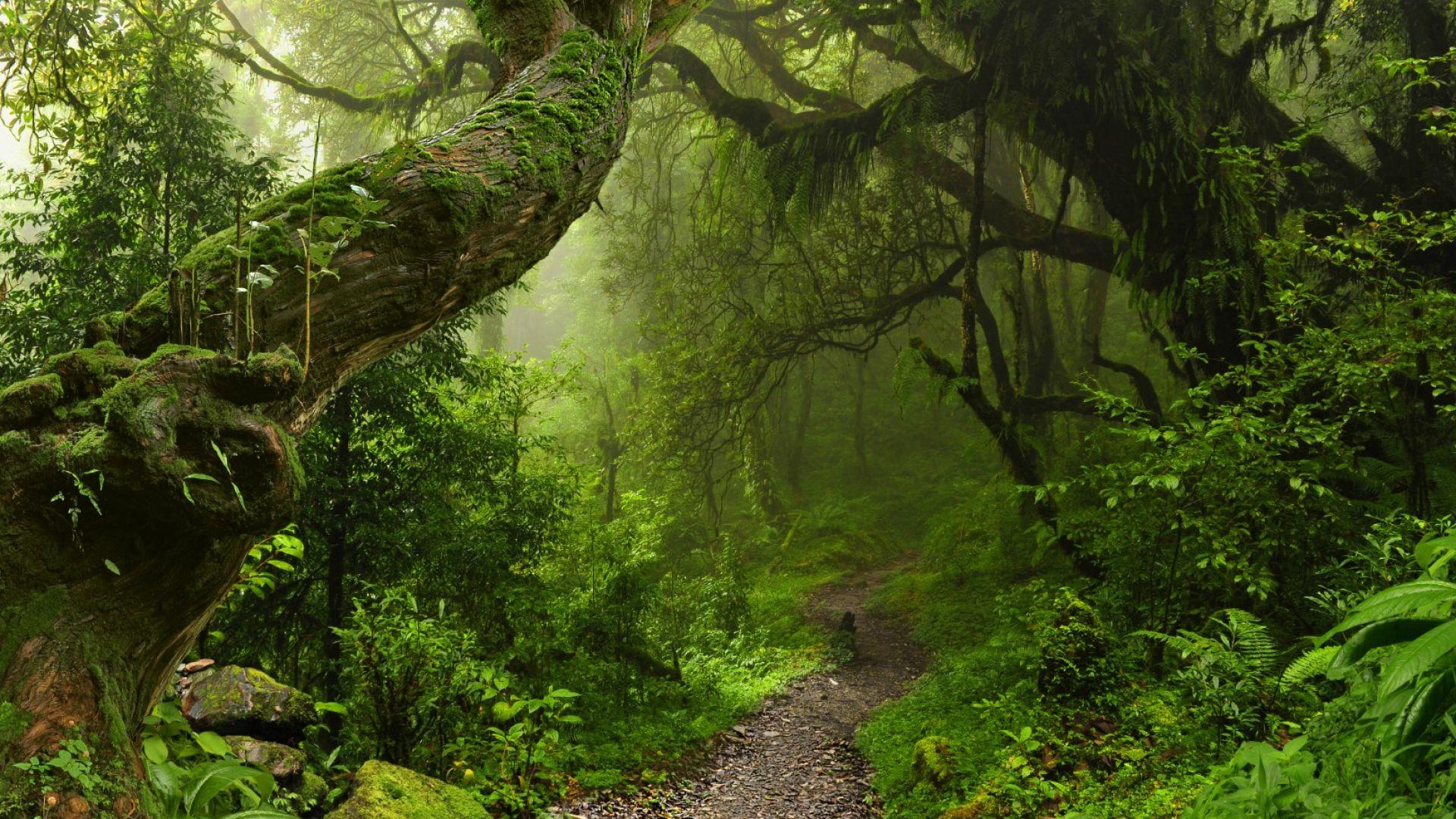 Растителността се променя по-бързо, отколкото през предишните  18 000 години