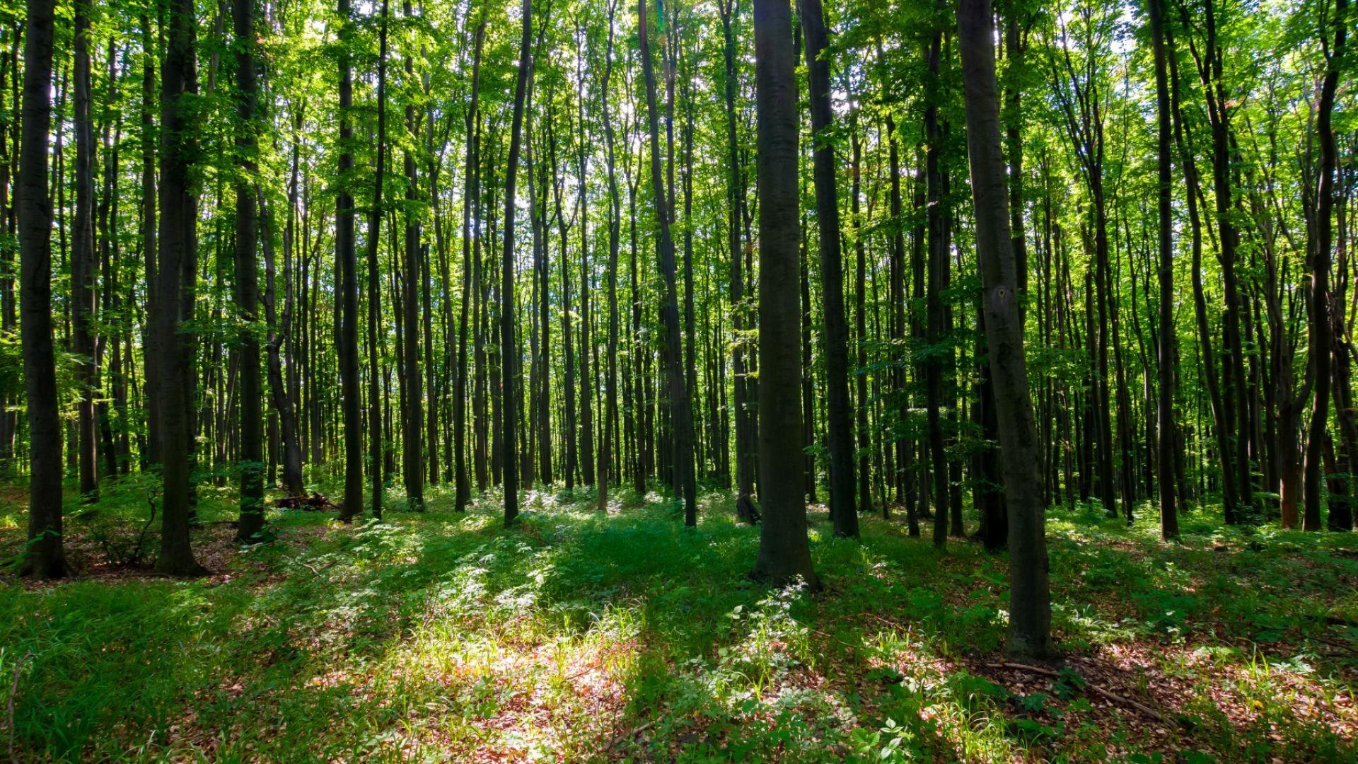 Учени: гората представлява единен организъм
