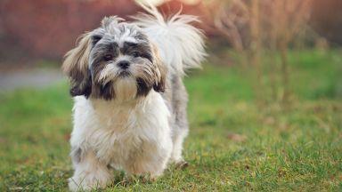 Строят нова кучешка поляна в Манастирски ливади - Изток