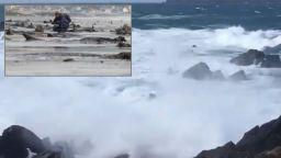 Бурята Хана откри праисторическа гора на дъното на океана
