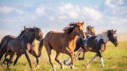 Недостигът на гориво в Куба върна воловете и конете на полето