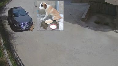 Агресия на пътя - шофьор прегази бездомно куче