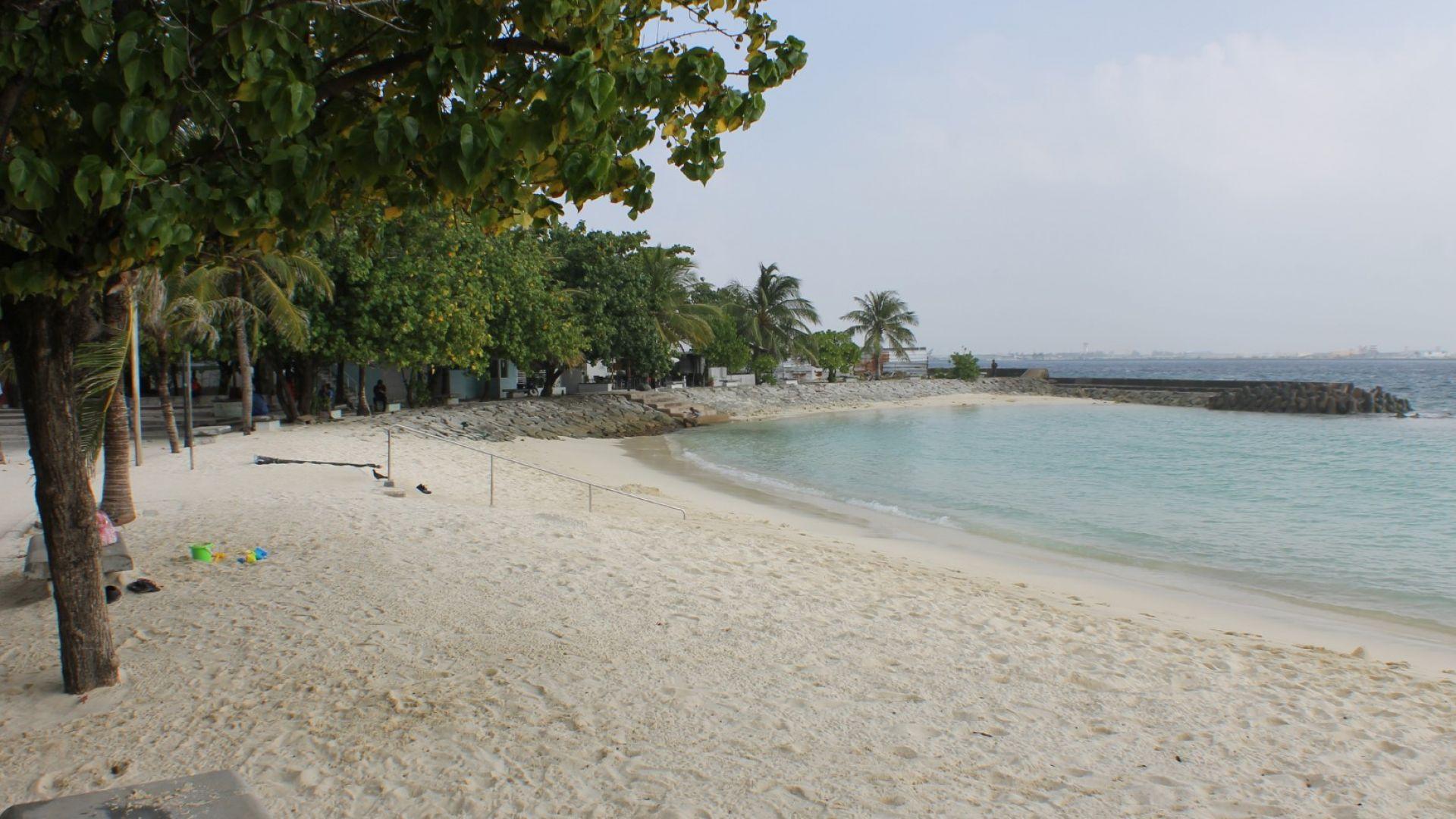 Разходките по плажа  намаляват броя на  безгръбначните животни