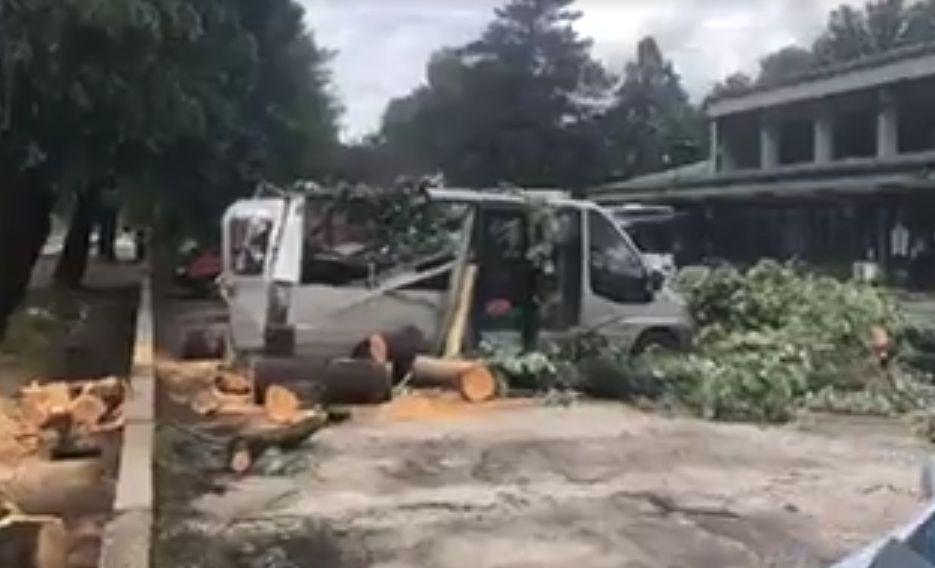 Дърво падна върху бус