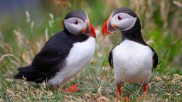 Птици кайри намерили смъртта си, заради затоплянето в  Арктика (снимки)