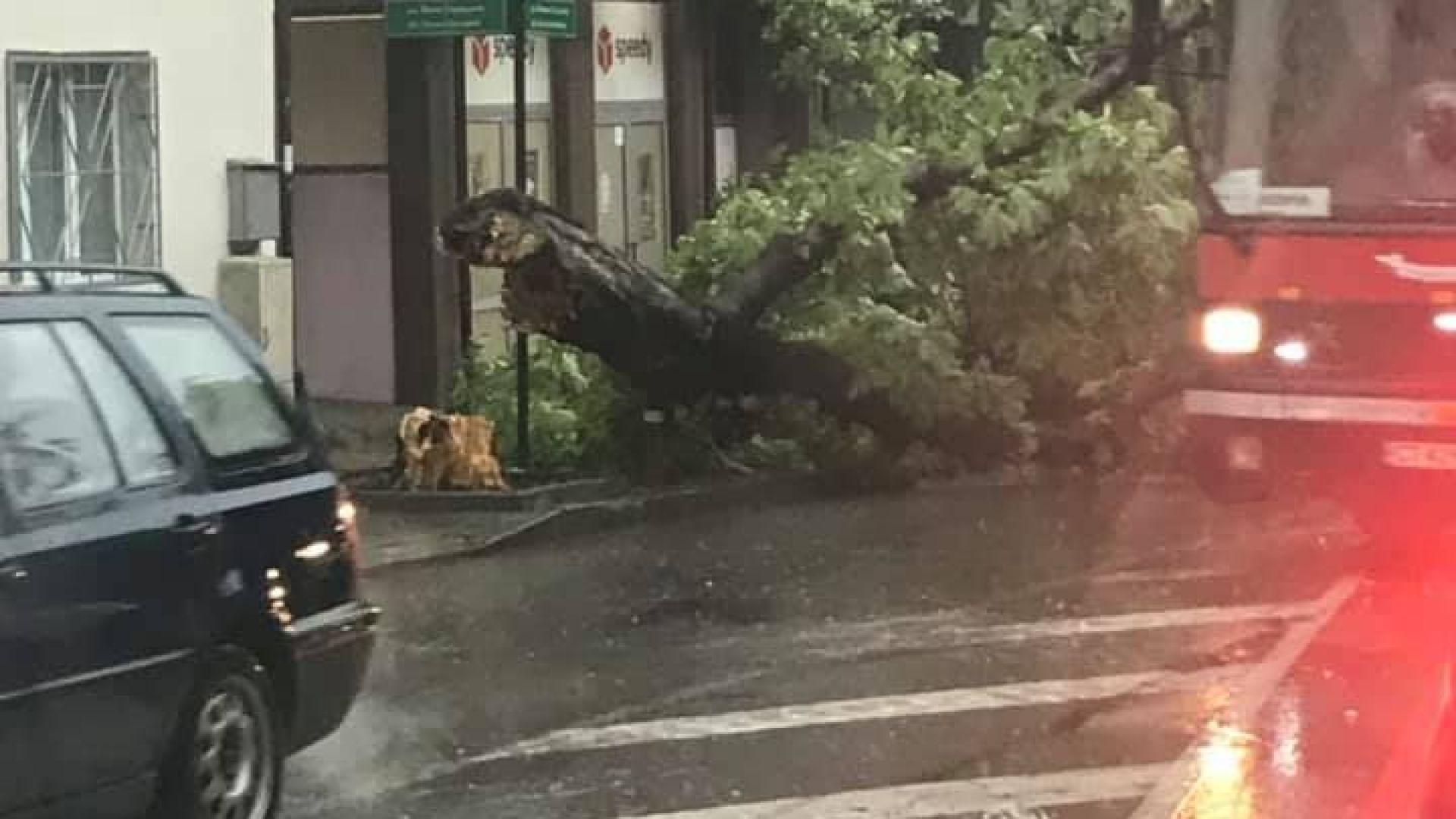 Потоп и в Стара Загора, бурята изкорени дървета (видео+снимки)