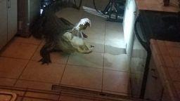 Пенсионерка от Флорида намери 3,5-метров алигатор в кухнята си (снимки+видео)