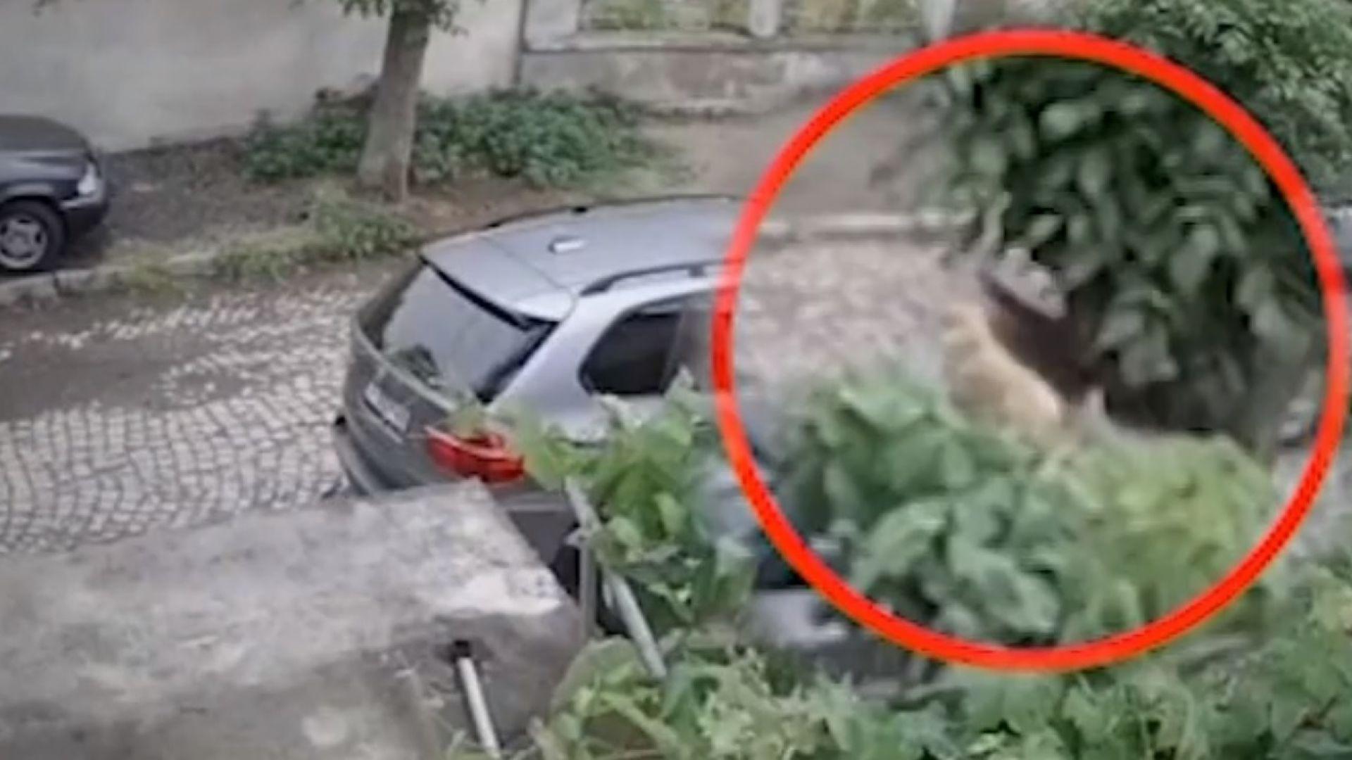 Още един шофьор прегази куче с колата си