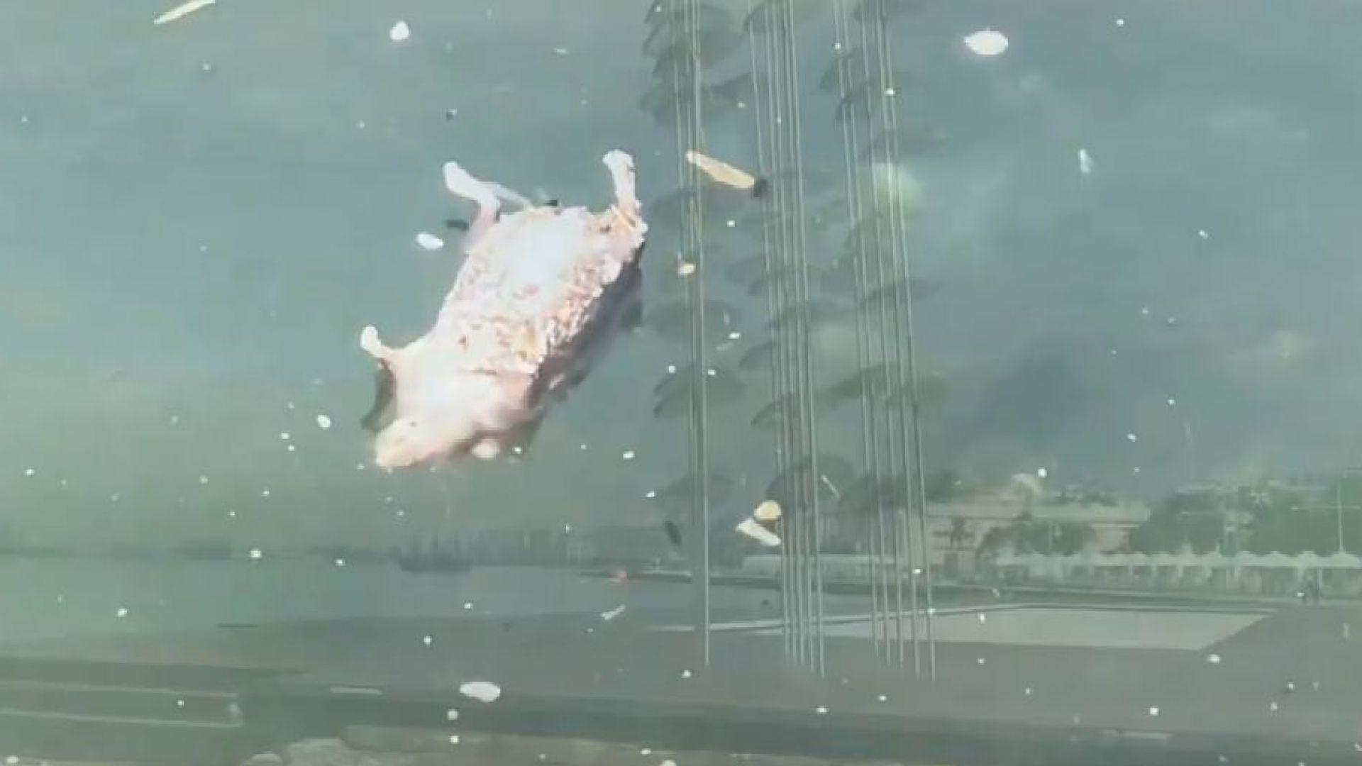 Солунският залив се напълни с мъртви мишки (видео)