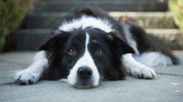 """Кучетата се заразяват"""" от стреса  на стопаните си"""