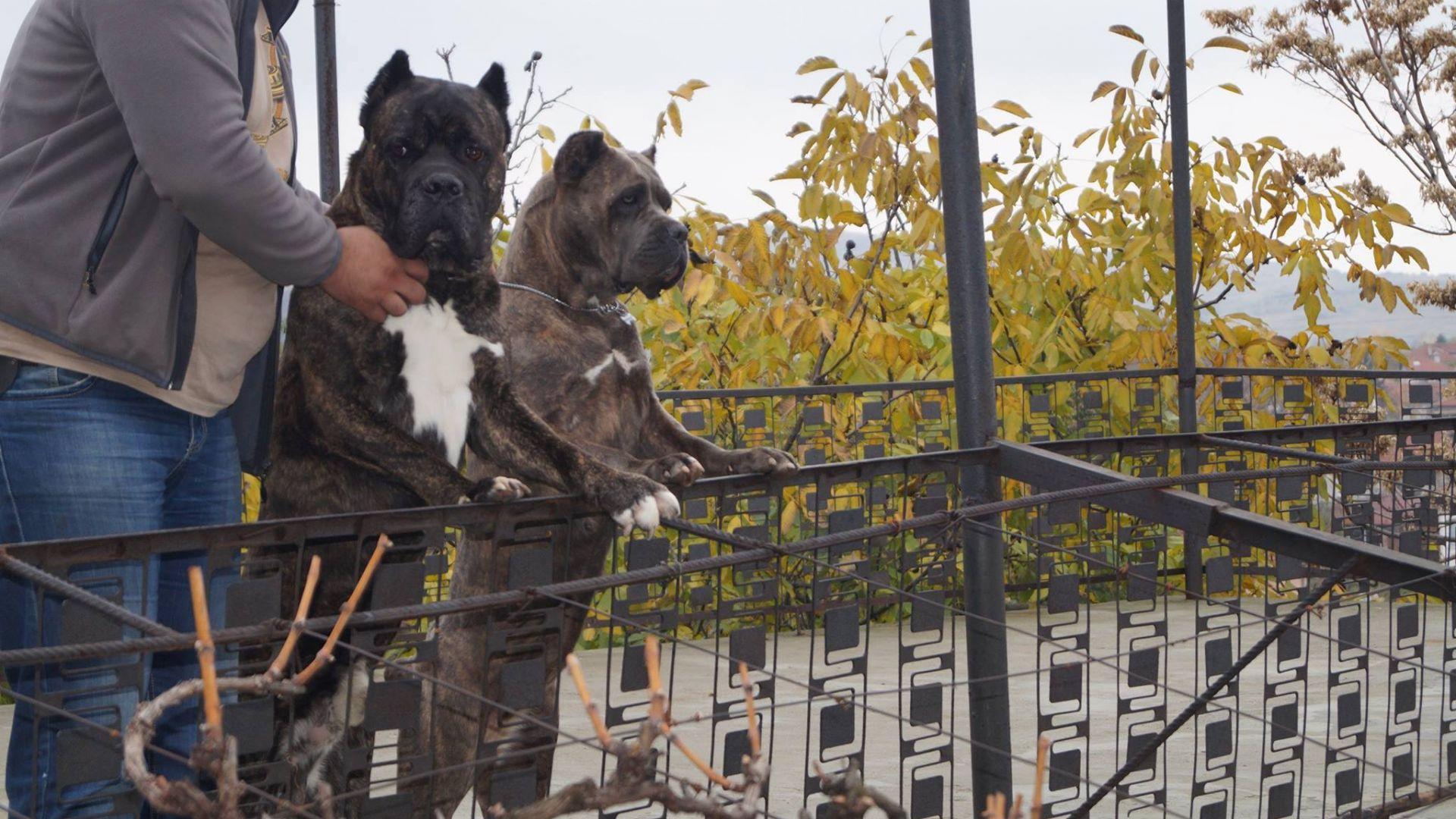 Крият от майката на разкъсания от кучета Димитър какво се е случило