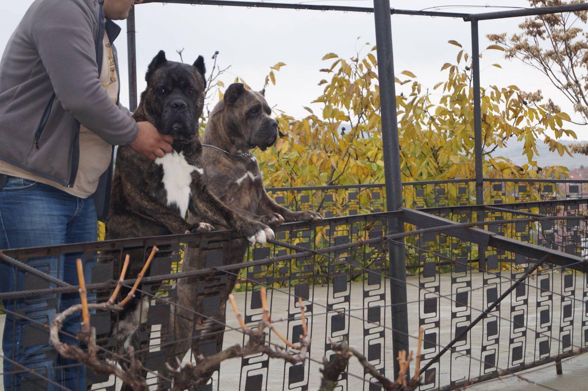 Карагьозов отглеждал кучетата във вилата си във Владо Тричков