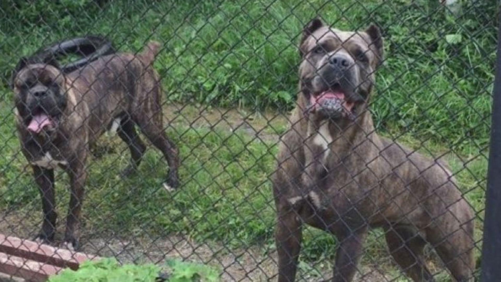 Кучетата-убийци вероятно са нападнали от глад