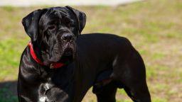 Собствениците на кучета са с по-здрави сърца