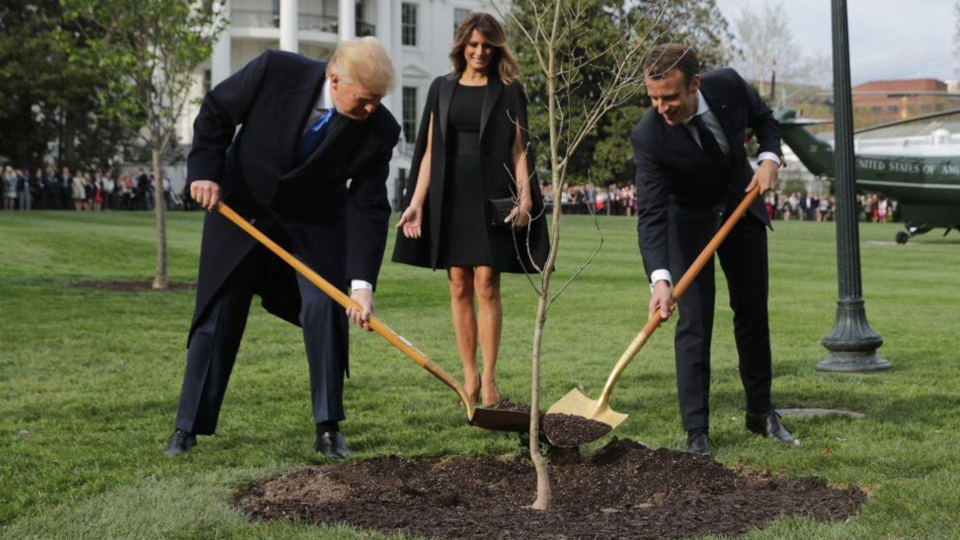 Дървото на приятелството между Тръмп и Макрон изсъхна