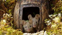 Ексцентричен фотограф строи къщички за мишки в градината си