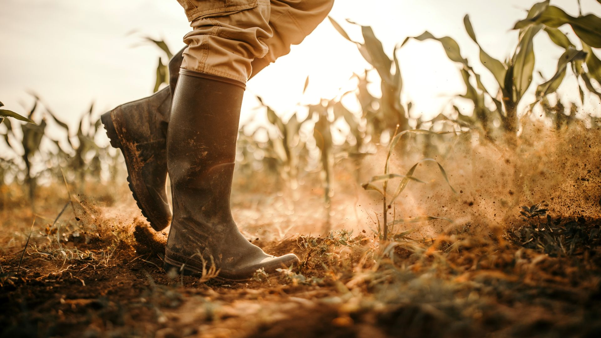 Започват проверки за наемане на ученици за работа на полето