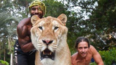 В Южна Каролина отглеждат хибрид между тигър и лъв
