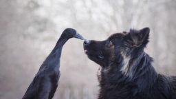 Фото романс за патица и куче