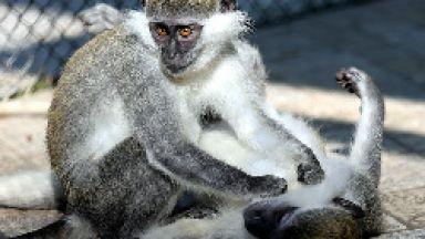 Варна ремонтира зоопарка за 1,2 млн. лв. по европроект