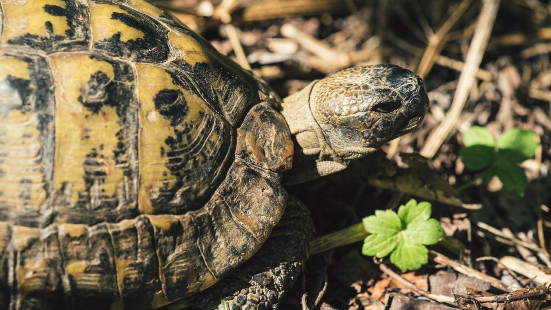 Съдим германец за незаконно държане на костенурки в Микрево