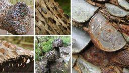 15 дървета, отрупани с монети, или мечтаният сън на нумизматите