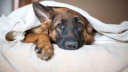 Учени обясниха защо кучетата гледат тъжно