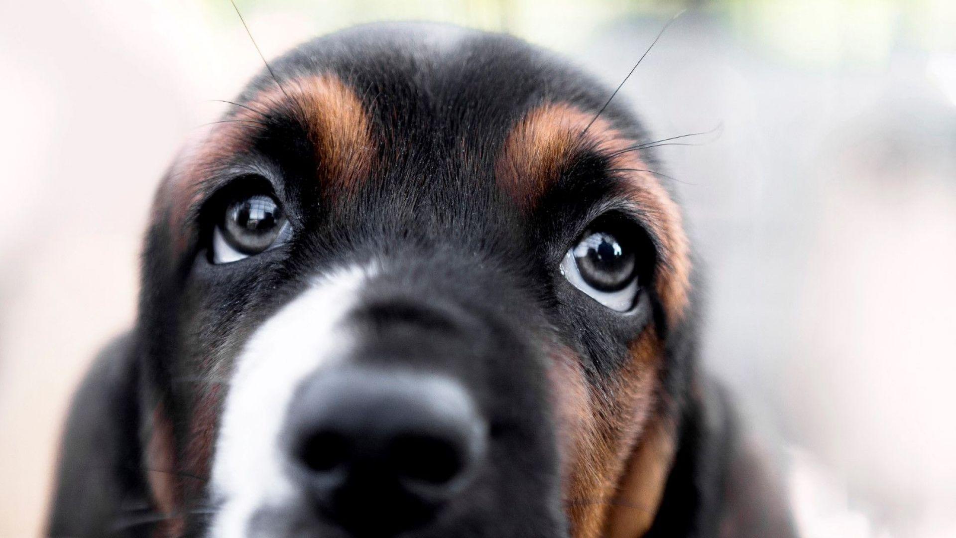 Ако се чудите защо кучетата често вперват във вас характерния