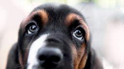 Kучетата променят погледа си, за да се харесат на хората