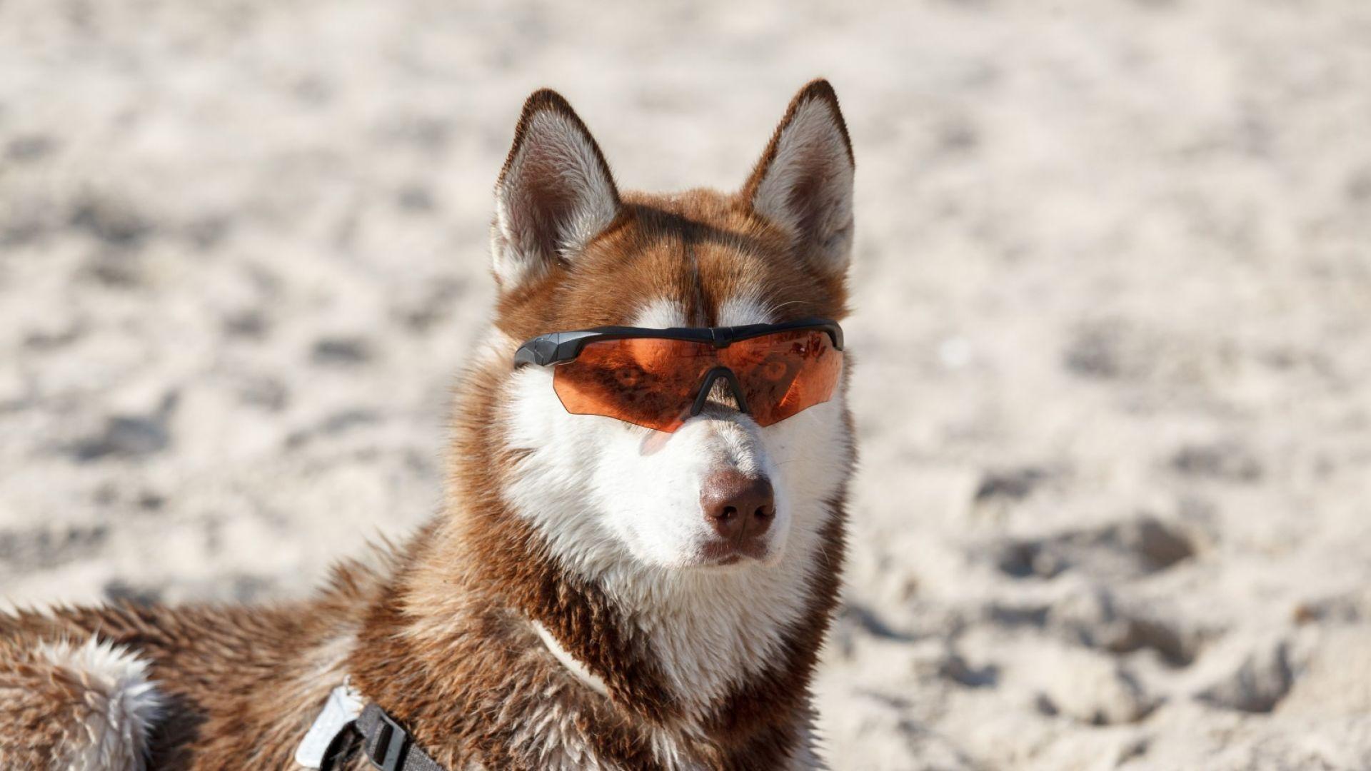 Да се спасим от жегите? Кученцата знаят как! (забавно видео)