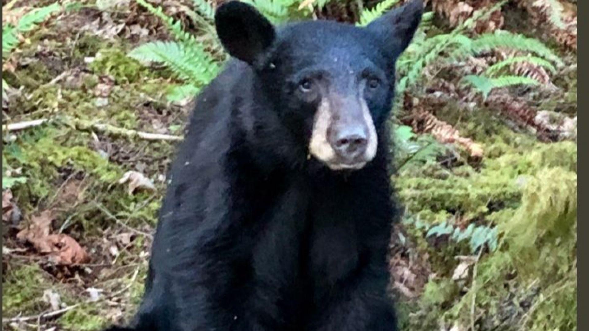 Служители на Орегонската организация за защита на дивите животни са