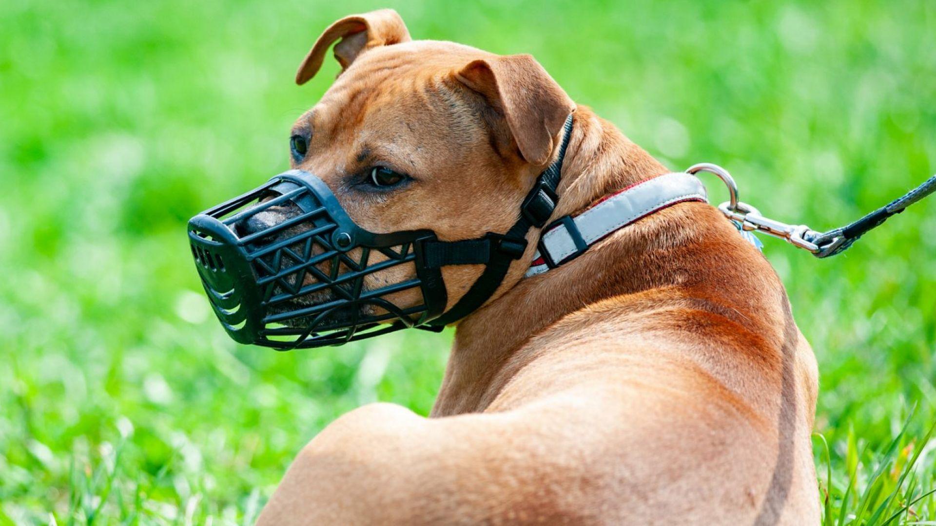 Глоба от 1000 лeва за куче без намордник предлагат от ГЕРБ