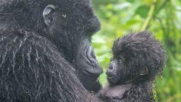 Невероятни снимки от дивата природа