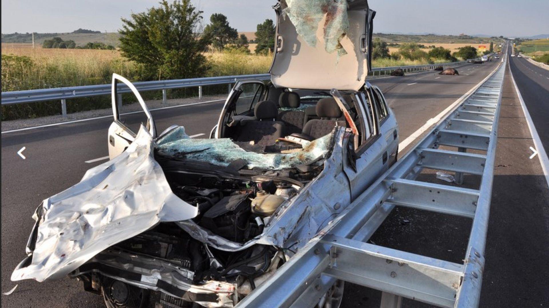 19-годишни младежи загинаха, а друг е в кома след удари в камион и стадо биволи