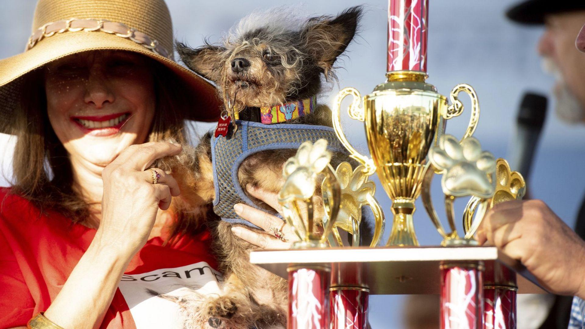Кривокракият Скамп дъ Трамп е най-грозното куче в света (снимки)