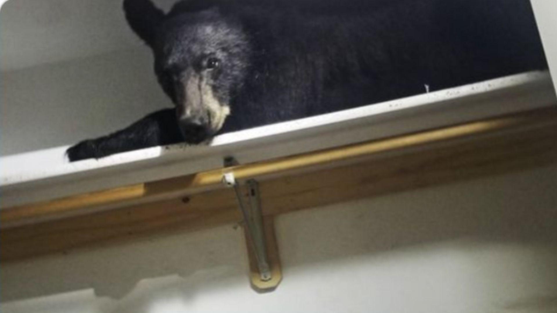 Полицията в град Мисула, щата Монтана, съобщи, че черна мечка