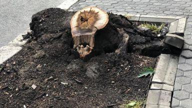 Камион събори дърво на сантиметри от майка с дете