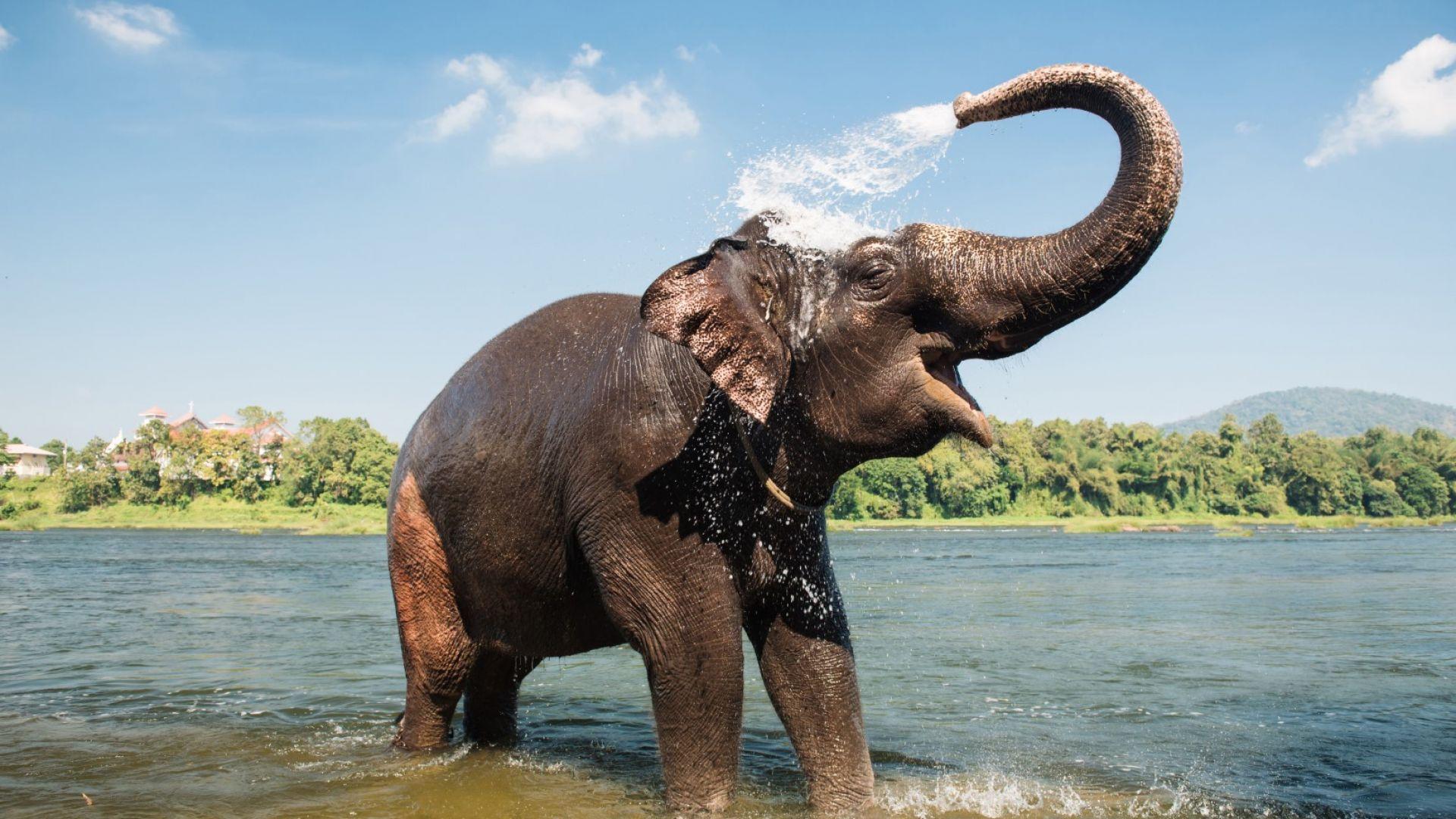Климатичните промени ще доведат до съперничества между различни видове животни