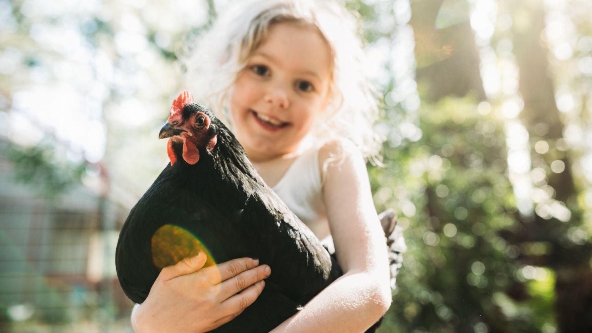 Изберете пиле, вместо бифтек, за да спасите света