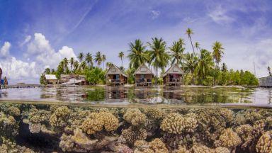 Най-добрите подводни фотографии за 2019