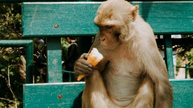 """Животните в московския зоопарк се разхлаждат  с ледени """"торти"""""""