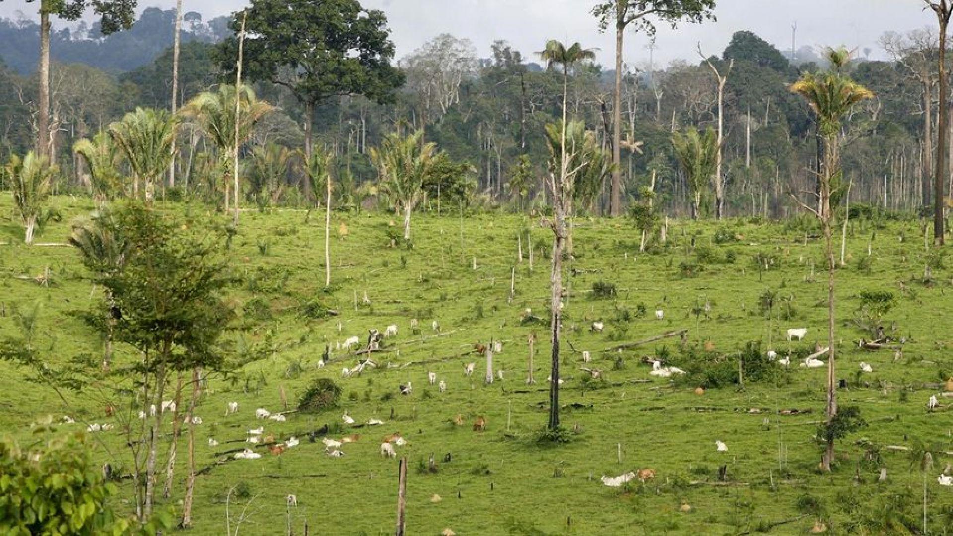 Природозащитниците от Auburn University в САЩ откриха връзка между изчезването